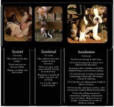 Olde English Bulldogge Puppy Weight Chart All Inclusive English Bulldog Growth Chart Head Size Growth