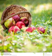 green and red apples in basket. apples autumn basket green and red in n