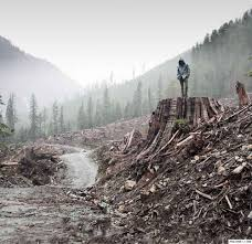 destruction of nature by humans essay their destiny is destruction non negotiable humanity777 s blog