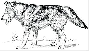 Wolf Coloring Pages To Print Download Free Printable And Coloring