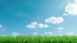 green grass field animated. Gorgeous Blue Sky With Green Grass Animated Stock Footage Video 6132149 | Shutterstock Field L