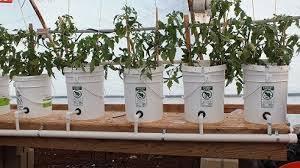 bucket gardening. Dutchbucket Gardening Bucket E