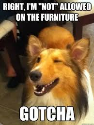 Funny Dog Quotes Best Animals That Don't Suck 48 Photos Best Friends Pinterest