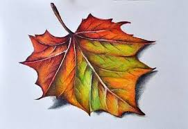 Image result for leaf drawings in pencil