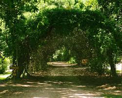 jungle gardens on avery island
