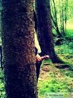 les sites de rencontres gratuits en ligne forest
