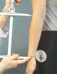 forearm size human characteristics database body size forearm length