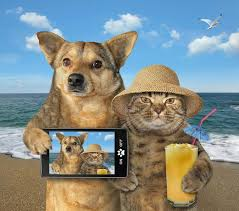 5,264 Dog Cat Summer Photos - Free & Royalty-Free Stock Photos from Dreamstime