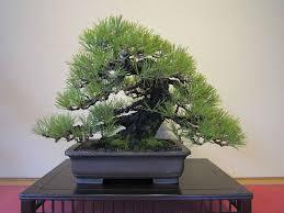 Vendita di piante da interno. Bonsai Prezzi Coltivare Bonsai Informazioni Bonsai Prezzi