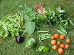 Organic Kitchen Gardening April 2010 Organic Kitchen Gardening And My Personal Musings