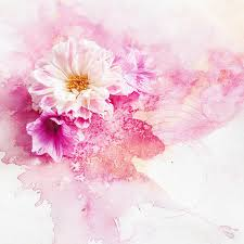 watercolour pink background and flowers photography by georgie st clair