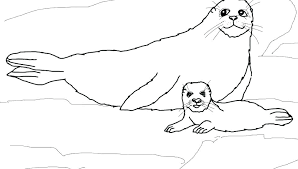 Leopard Seal Colouring Page Incredible Seals Coloring Pages Peaceful