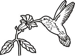 simple hummingbird drawing. Contemporary Drawing Images For U003e Simple Hummingbird Drawing To D