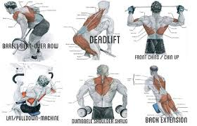 Exercise To Build Big Back Muscles Back Muscles Back