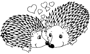 Small Picture Hedgehog Breeders In Kentucky 42301 Happy Heart Hedgies