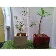 Image Brick Square Indoor Planter Box Indiamart Square Indoor Planter Box Rs 400 piece Urban Integarated