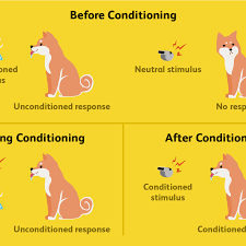 Classical Conditioning In The Classroom Classical Conditioning How It Works With Examples