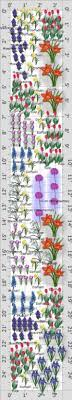 flower garden plans layouts the old