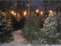 Local Christmas Tree Farm Opens Its Doors For The Season  WANELocal Christmas Tree Lots