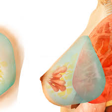 Why Are My Areolas So Light Breast Cancer And The Areola
