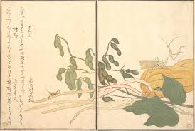 kitagawa utamaro ukiyo. kitagawa utamaro: praying mantis and cone-headed grasshopper (kamakiri batta), utamaro ukiyo e