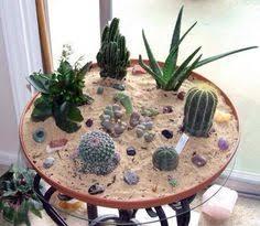 Cactus Garden. Ideas  Pinterest