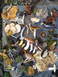 Species Diversity Definition Biodiversity Wikipedia
