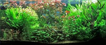 90 gallon planted tank by aquapros