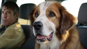 a dog s purpose bailey. Beautiful Bailey A Dogu0027s Purpose Dogs Purpose Movie Clip  Ethan Finds Bailey At The  Pound Fandango Inside Dog S V