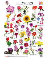 Flower Chart In English Flowers Names Start With A Flower Chart Each Flower