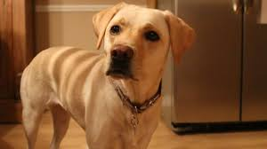 Five Ways to Know Your <b>Dog</b> Loves You - YouTube