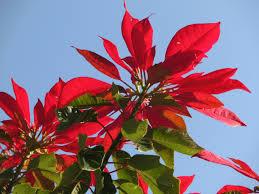 Kostenlose Foto Baum Blühen Blatt Blume Blütenblatt
