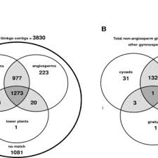 Angiosperm Vs Gymnosperm Venn Diagram A Venn Diagram Illustrating The Number Of Ginkgo Contigs With Shared
