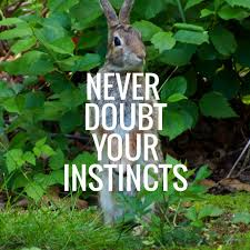 Image result for instinct never doubt