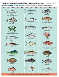2014 Recreational Species With No Closed Seasons Fishing
