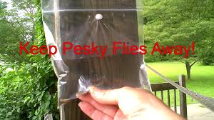 keep those pesky flies away from picnic areas easy home remedy