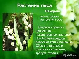 Презентация на тему МОУ Казёнская средняя общеобразовательная  2 Растение