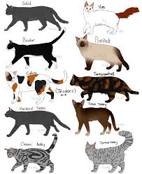 Cat Fur Patterns By Nixhil Cat Anatomy Rare Cats Cat Pattern