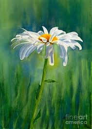 this is a watercolor painting of a white shasta daisy with a blue green background painted wet in wet
