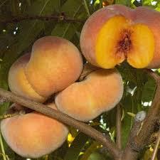 Non GMO U0026 Heirloom Fruit Seeds Pack  NonHybrid Fruit Seeds Non Gmo Fruit Trees For Sale