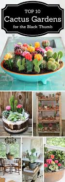 TOP 10 Beautiful Cactus Gardens for the Black Thumb