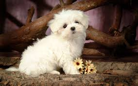 dog wallpapers dog wallpapers free dogs hd dogs images for