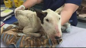 las vegas residents fed up city s dog abuse cases