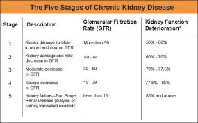 Gfr Kidney Function Chart Pin By Lainie On Kidney Bean Kidney Disease Stages Kidney