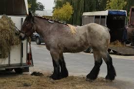 Deinze Is Voor De 90e Keer Paardenhoofdstad Van België Deinze