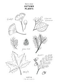 なぞって描けるイラストレッスン秋の植物の描き方free Printable