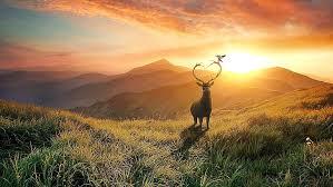 hd wallpaper fantasy art deer antler