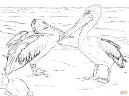 Small Picture Australian Pelicans coloring page Free Printable Coloring Pages