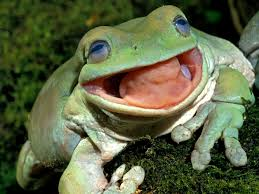 image of a frog. Perfect Frog In Image Of A Frog A