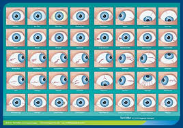 Integrated Iridology Constitution Chart Integrated